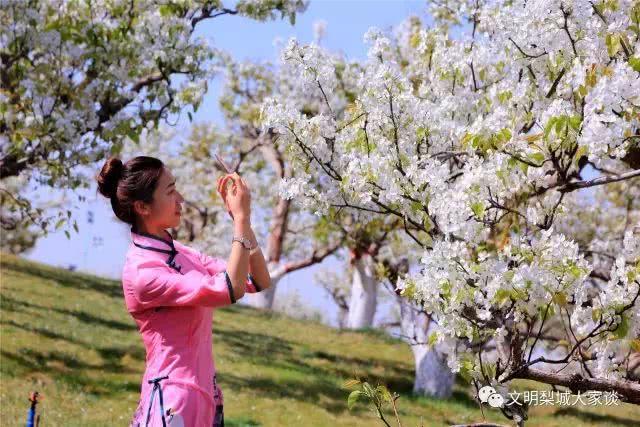 库尔勒市推出春赏梨花季旅游线路
